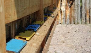 Amerikanische Faulbrut breitet sich in Oberberg aus