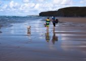 Urlaub mit Hund – das gilt es zu beachten