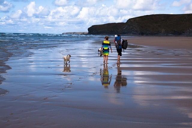 Photo of Urlaub mit Hund – das gilt es zu beachten
