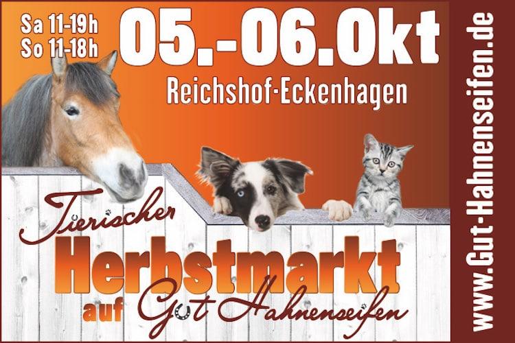 Photo of Hunderallye und Tiersegnung für Hund & Herrchen
