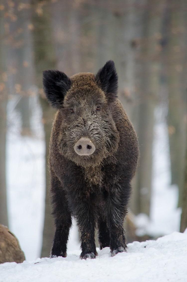 Photo of Tierseuchenübung zur Bekämpfung der Afrikanischen Schweinepest