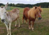 Tierheim Wipperfürth unterstützt den Welttierschutztag
