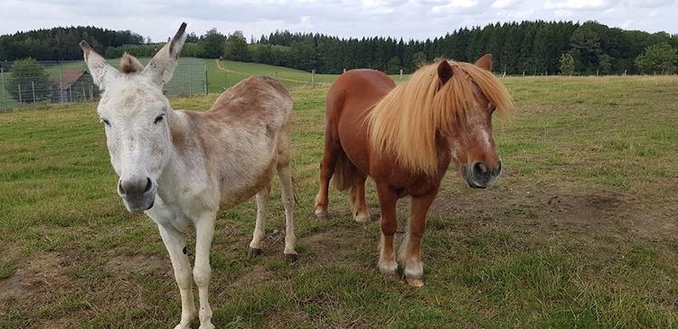 Photo of Tierheim Wipperfürth unterstützt den Welttierschutztag