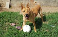 Tierheim Wipperfürth – Welthundetag am 10. Oktober