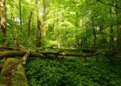Naturschutzinitiative fordert mehr naturnahe Wälder