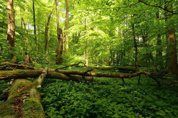 Photo of Naturschutzinitiative fordert mehr naturnahe Wälder