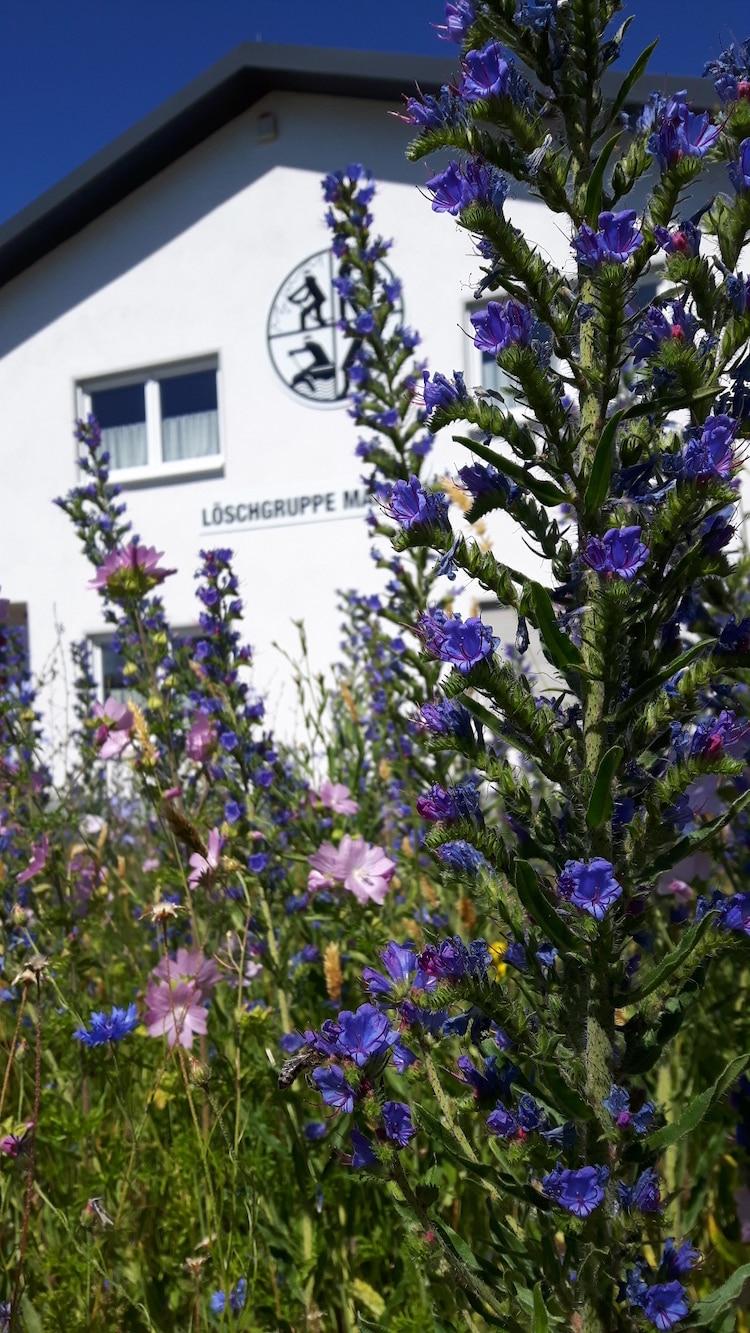 Photo of Wiehl blüht auf – 7500 Blumen-Zwiebeln gegen das Insektensterben