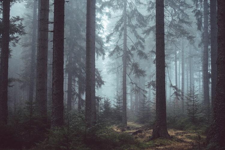 Photo of Forstarbeiten wegen Borkenkäferbefall im Naturpark Bergisches Land