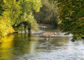 Fischereiverein hat erste Bach- und Meerforellen in Wupper entdeckt