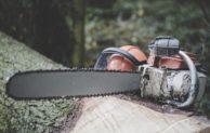 Holz-Einschlag dient der Sicherheit der Verkehrsteilnehmer