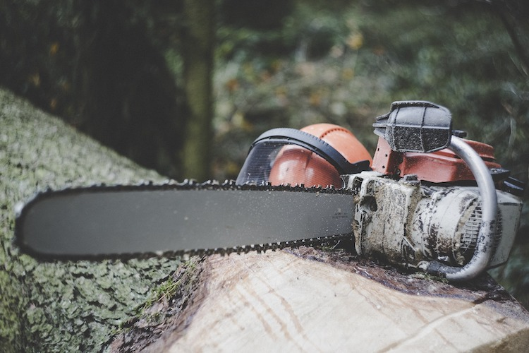 Photo of Holz-Einschlag dient der Sicherheit der Verkehrsteilnehmer
