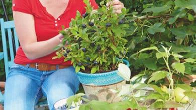 Photo of 6 Tipps für nachhaltiges Gärtnern mit torffreien Bioerden