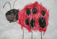 Photo of Die Welt der Insekten – Kreativ-Wettbewerb in Wipperfürth