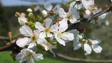 Photo of Zeigt uns den Frühling an eurem Fenster