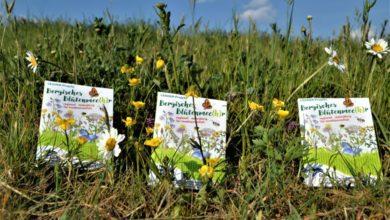 Photo of Bergisches Blütenmee(hr) verteilt kostenloses Saatgut