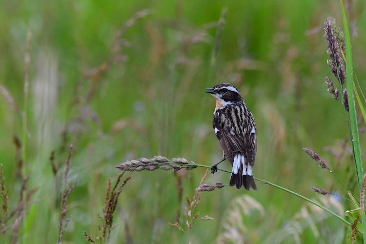 Photo of NI fordert zum Tag der Artenvielfalt: Artensterben stoppen