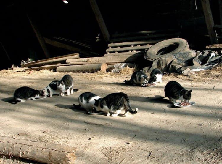 Photo of Tierschutzverein macht auf das Leid von Katzen aufmerksam