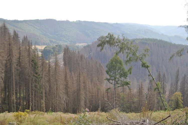 Photo of Wiederbewaldung im OBK – Konzepte und Waldbegehung