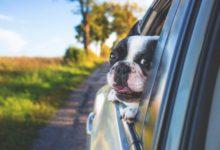 Photo of Wie wichtig ist eine Hundehaftpflicht für Reisen mit dem Hund?