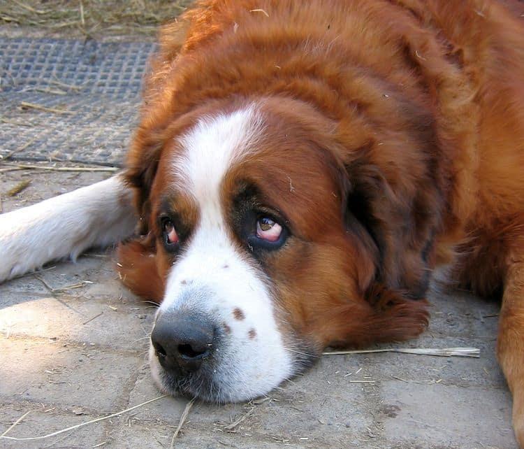 Photo of Welttierschutztag: Zusammen für Tierheime