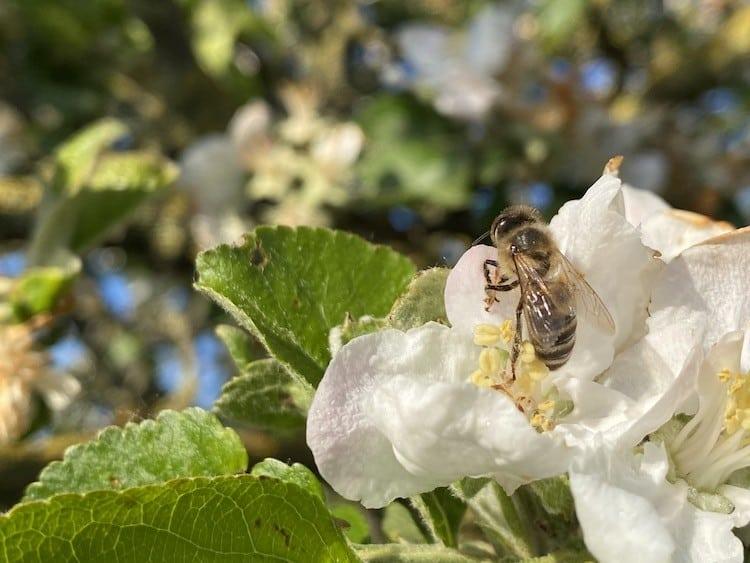 2021-01-13-Bienenvoelker