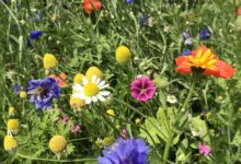 2021-05-05-Blumenwiesen