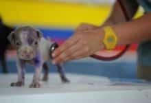 2021-09-13-Hundekrankenversicherung