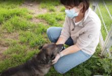 Tierheim Wipperfürth - Video vom Tag des Hundes 2021
